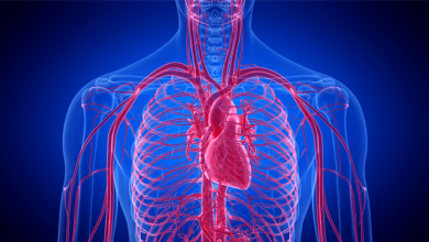 Primordial Prevention of Cardiovascular Disease - The Role of Blood Pressure