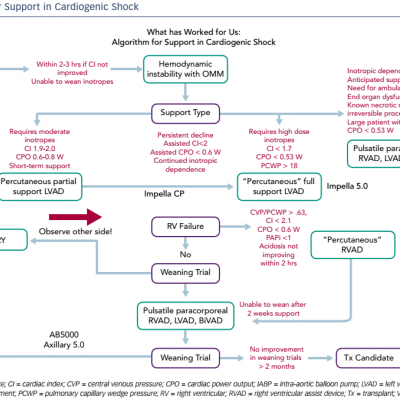 Algorithm for Support in Cardiogenic Shock