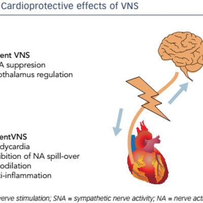 Cardioprotective effects of VNS