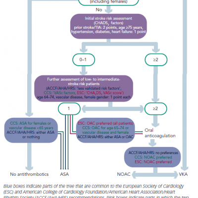 Decision Tree for Antithrombotic Therapy in Patients with Non-valvular Atrial Fibrillation
