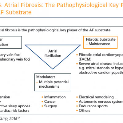 Atrial Fibrosis: The Pathophysiological Key Player of the AF Substrate