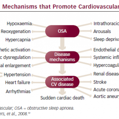 Mechanisms that Promote Cardiovascular Disease