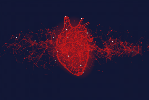 Mavacamten favorably impacts cardiac structure in obstructive hypertrophic cardiomyopathy: EXPLORER-HCM cardiac magnetic resonance substudy analysis