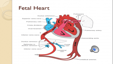 Pediatric Cardiac Lecture: Cardiac Disorders and Care